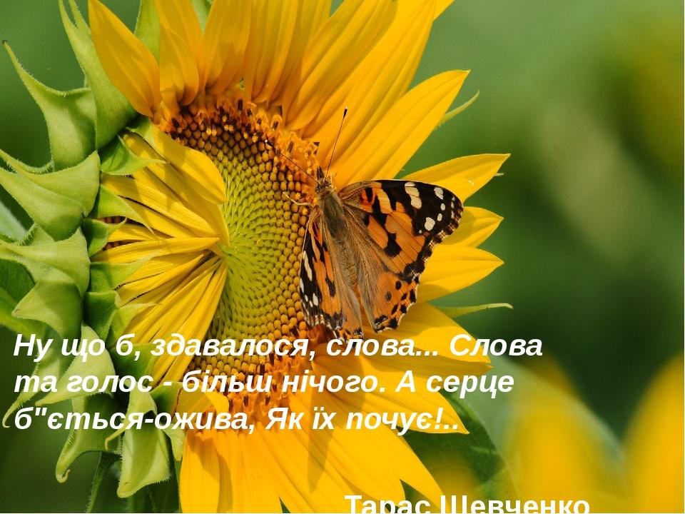 """Ну що б, здавалося, слова... Слова та голос - більш нічого. А серце б""""ється-ожива, Як їх почує!.. Тарас Шевченко"""
