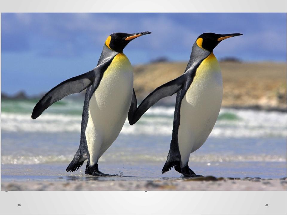 (Пінгвін – 265м)