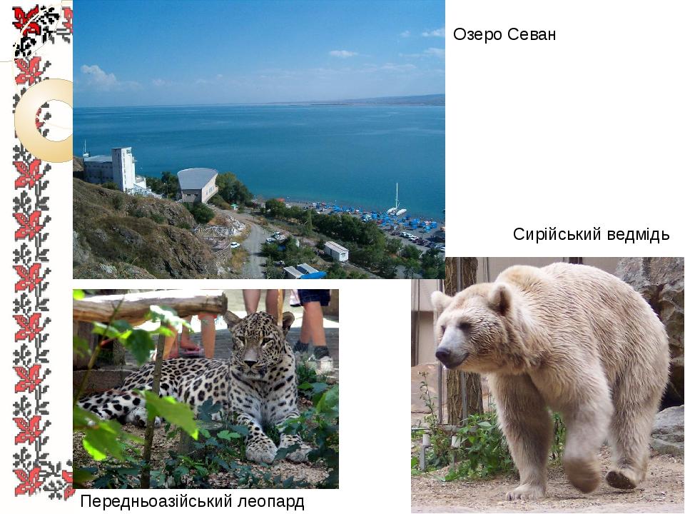Озеро Севан Передньоазійський леопард Сирійський ведмідь