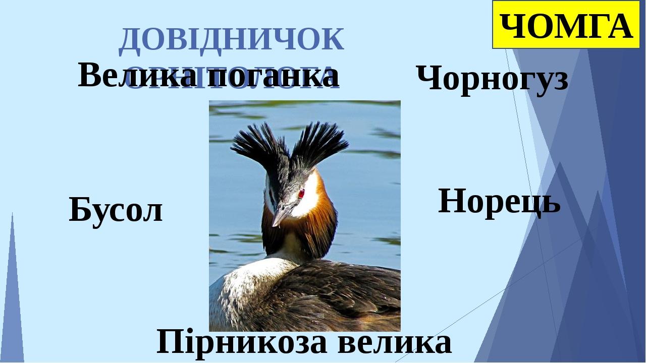 ДОВІДНИЧОК ОРНІТОЛОГА Норець Пірникоза велика Чорногуз ЧОМГА Велика поганка Бусол