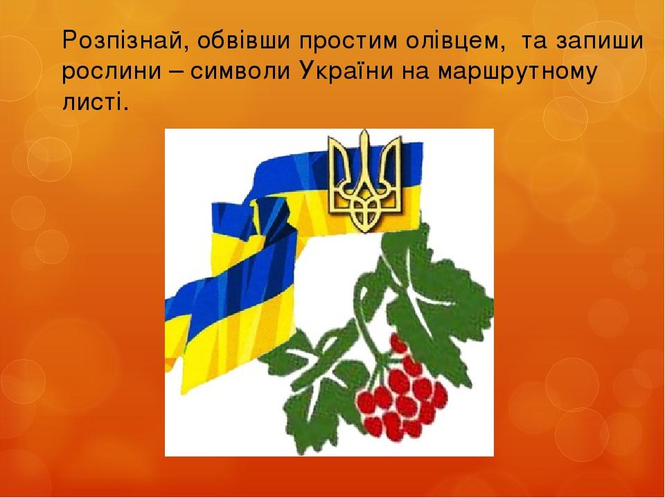 Розпізнай, обвівши простим олівцем, та запиши рослини – символи України на маршрутному листі.
