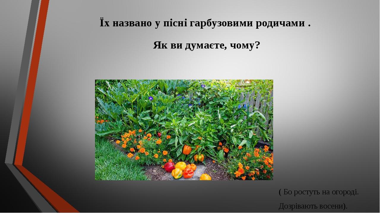 Їх названо у пісні гарбузовими родичами . Як ви думаєте, чому? ( Бо ростуть на огороді. Дозрівають восени).
