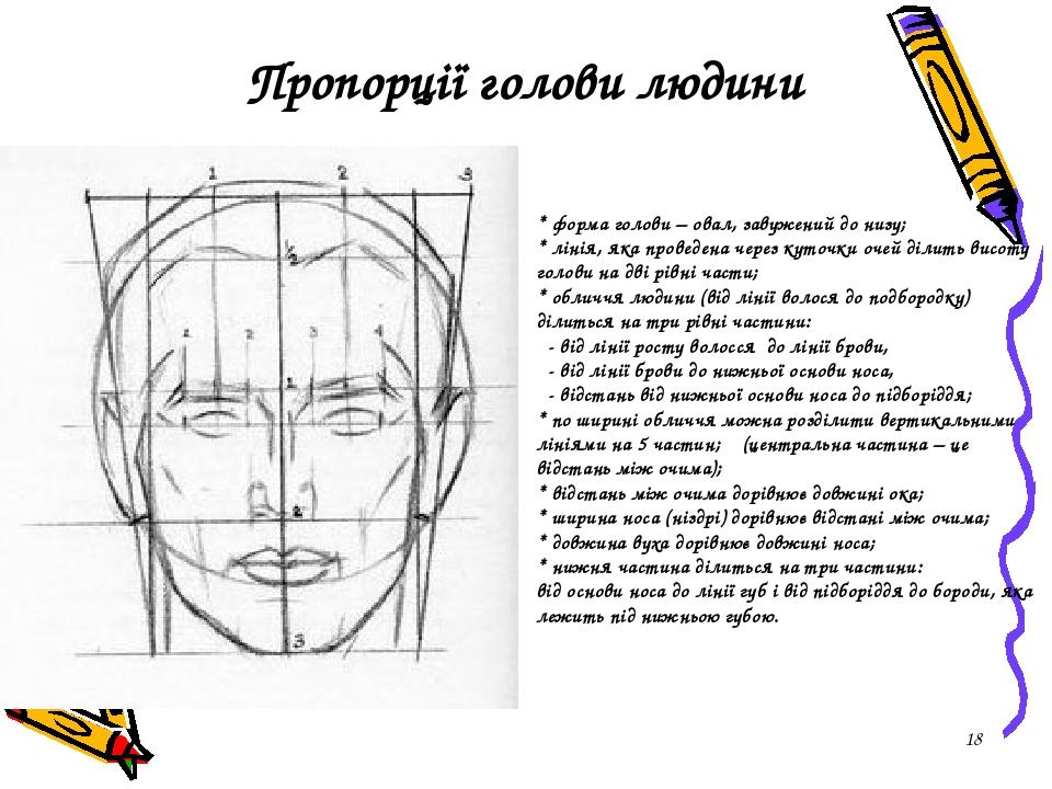 * Пропорції голови людини * форма голови – овал, завужений до низу; * лінія, яка проведена через куточки очей ділить висоту голови на дві рівні час...