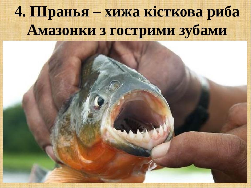 4. ПІранья – хижа кісткова риба Амазонки з гострими зубами