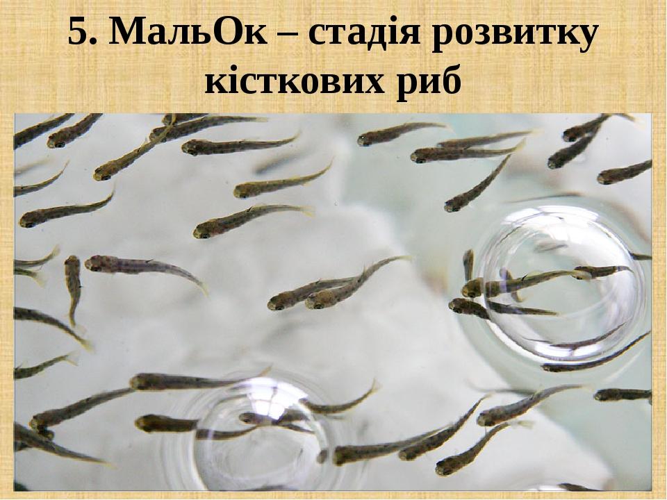 5. МальОк – стадія розвитку кісткових риб