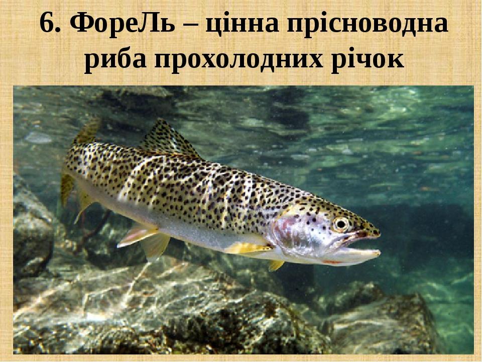 6. ФореЛь – цінна прісноводна риба прохолодних річок