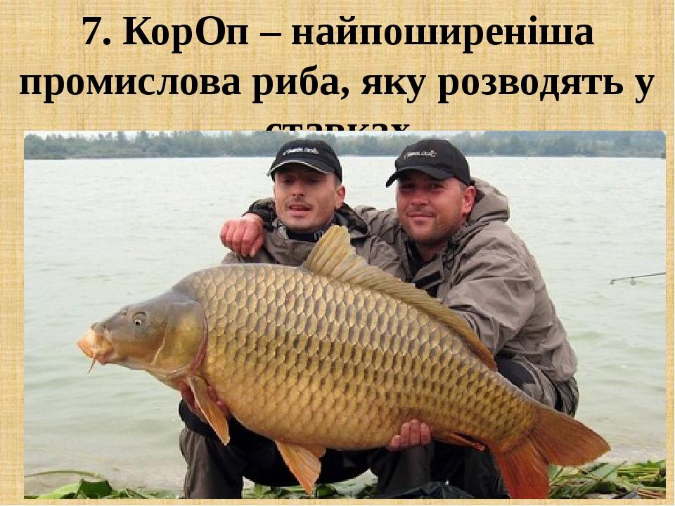 7. КорОп – найпоширеніша промислова риба, яку розводять у ставках