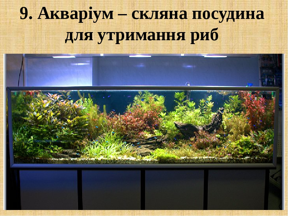 9. Акваріум – скляна посудина для утримання риб