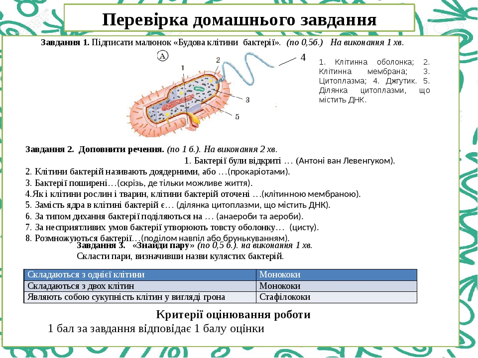 Перевірка домашнього завдання Завдання 1. Підписати малюнок «Будова клітини бактерії». (по 0,5б.) На виконання 1 хв. 4 Завдання 2. Доповнити реченн...