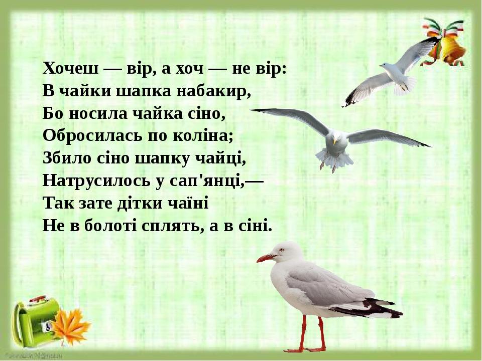 Хочеш — вір, а хоч — не вір: В чайки шапка набакир, Бо носила чайка сіно, Обросилась по коліна; Збило сіно шапку чайці, Натрусилось у сап'янці...