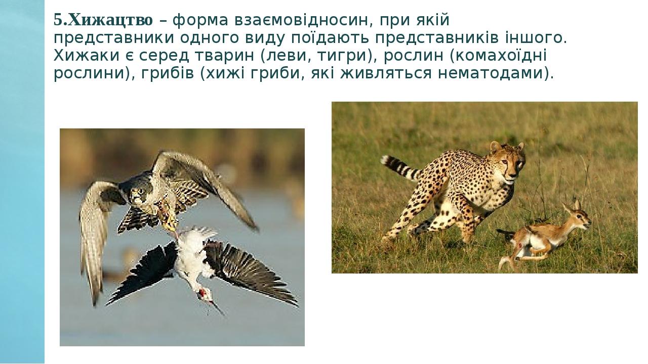 5.Хижацтво – форма взаємовідносин, при якій представники одного виду поїдають представників іншого. Хижаки є серед тварин (леви, тигри), рослин (ко...