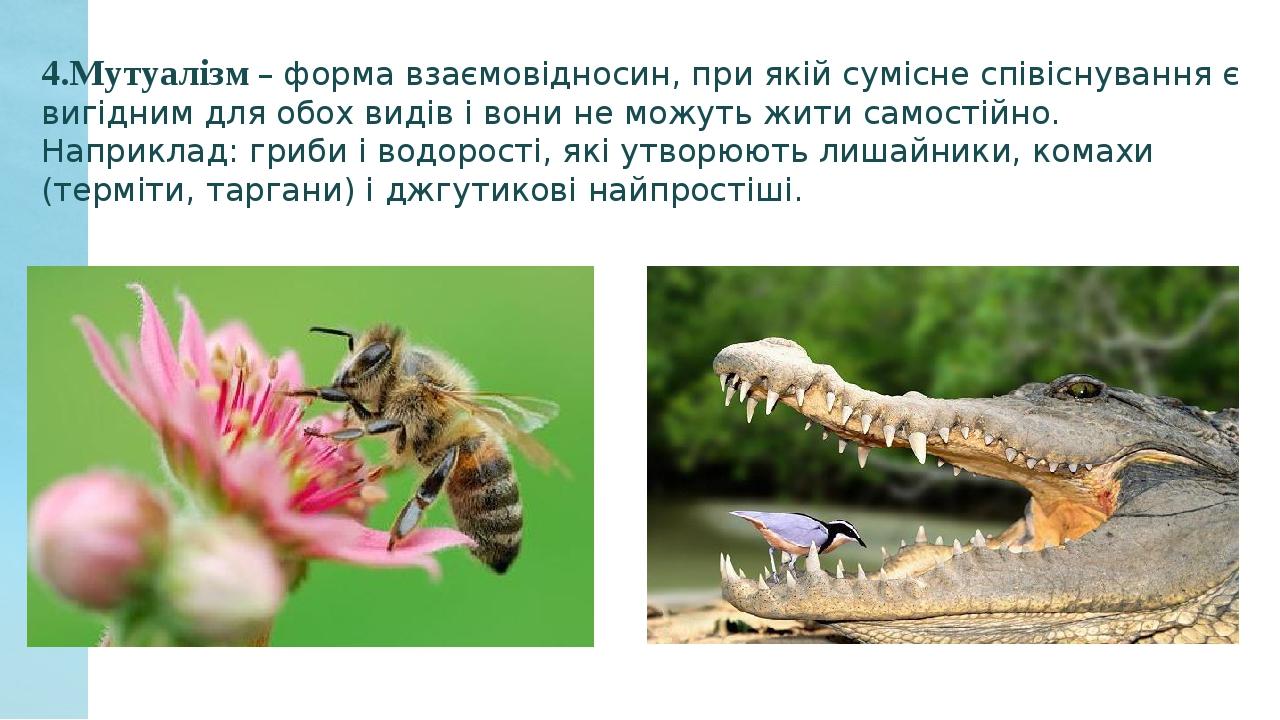 4.Мутуалізм – форма взаємовідносин, при якій сумісне співіснування є вигідним для обох видів і вони не можуть жити самостійно. Наприклад: гриби і в...