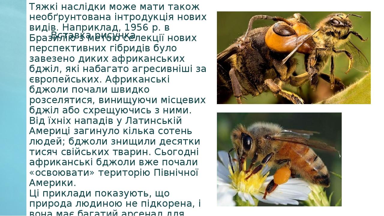 Тяжкі наслідки може мати також необґрунтована інтродукція нових видів. Наприклад, 1956 р. в Бразилію з метою селекції нових перспективних гібридів ...