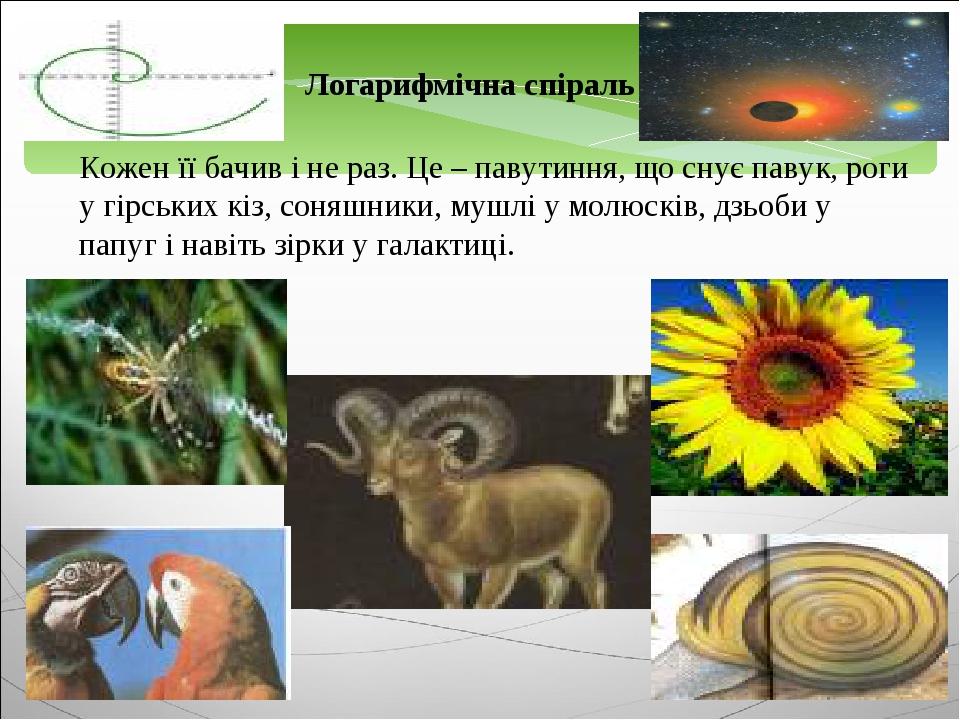Логарифмічна спіраль Кожен її бачив і не раз. Це – павутиння, що снує павук, роги у гірських кіз, соняшники, мушлі у молюсків, дзьоби у папуг і нав...