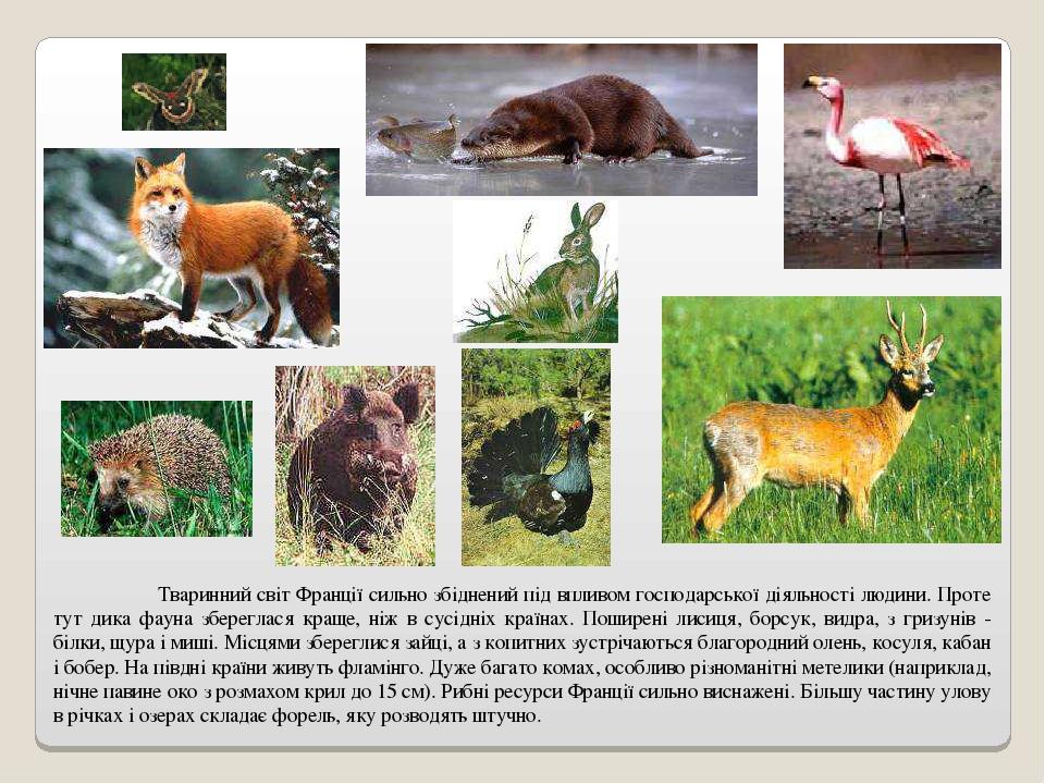 Тваринний світ Франції сильно збіднений під впливом господарської діяльності людини. Проте тут дика фауна збереглася краще, ніж в сусідніх країнах....