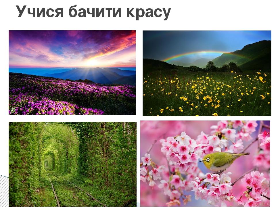Учися бачити красу