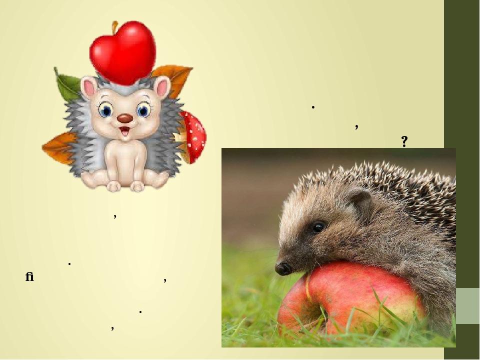 Часто малюють їжачків з яблуками на голках. Яблук їжак не їсть, то навіщо їх збирає? А річ у тому, що в їжакових колючках заводяться блохи і кліщі....