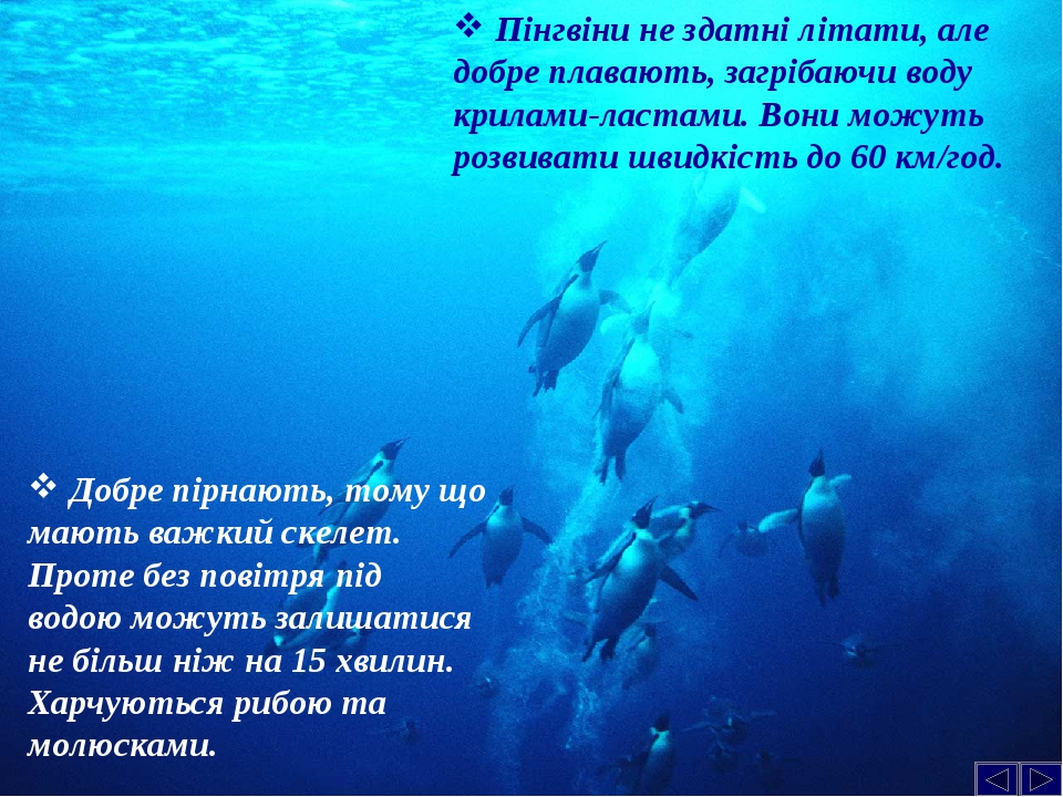 Добре пірнають, тому що мають важкий скелет. Проте без повітря під водою можуть залишатися не більш ніж на 15 хвилин. Харчуються рибою та молюсками...