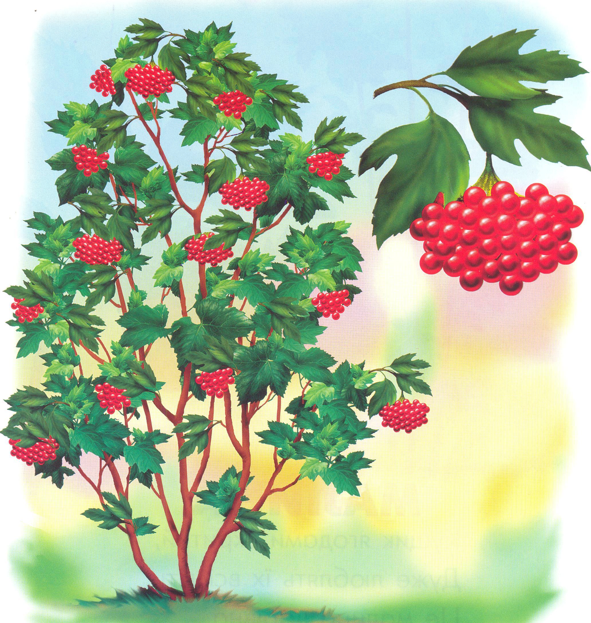 Картинка кустарника для детей