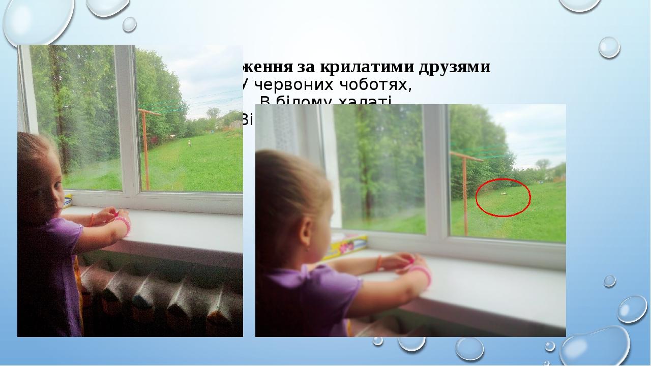 Спостереження за крилатими друзями У червоних чоботях, В білому халаті Він весною прилетів І сидить на хаті.