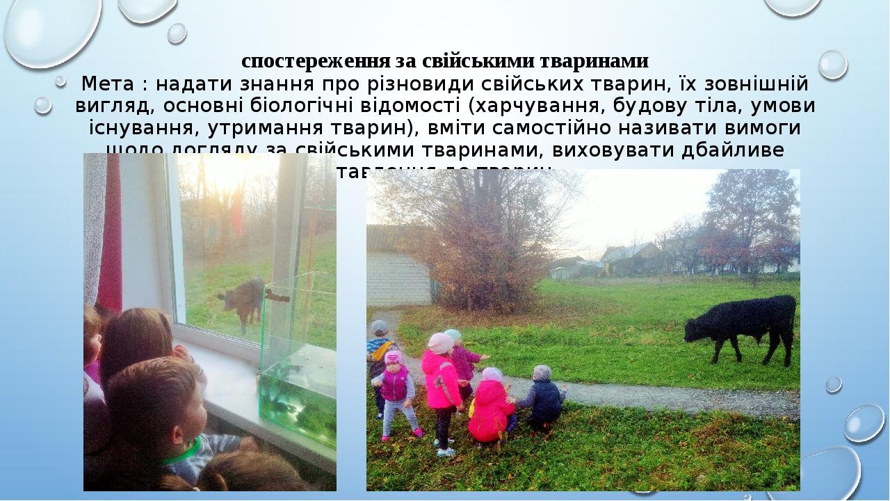 спостереження за свійськими тваринами Мета : надати знання про різновиди свійських тварин, їх зовнішній вигляд, основні біологічні відомості (харчу...