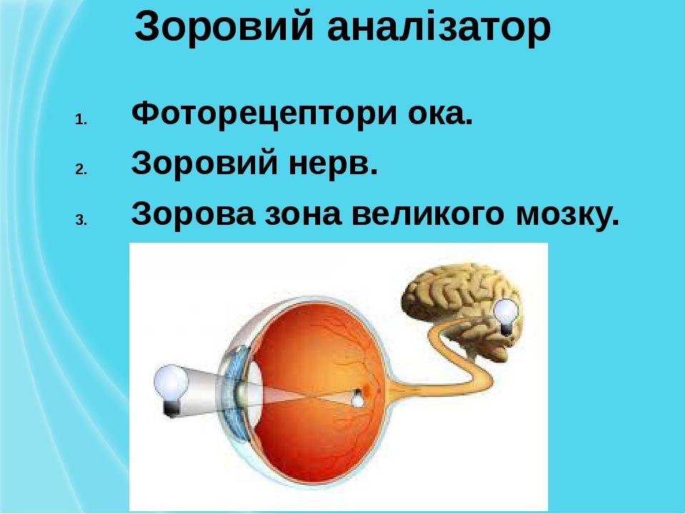 Зоровий аналізатор Фоторецептори ока. Зоровий нерв. Зорова зона великого мозку.