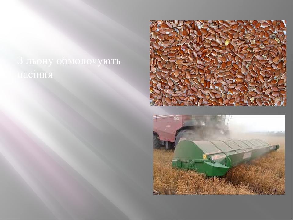 З льону обмолочують насіння