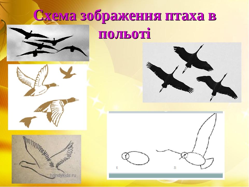 Схема зображення птаха в польоті