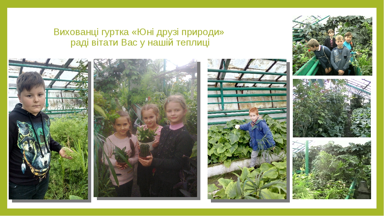 Вихованці гуртка «Юні друзі природи» раді вітати Вас у нашій теплиці