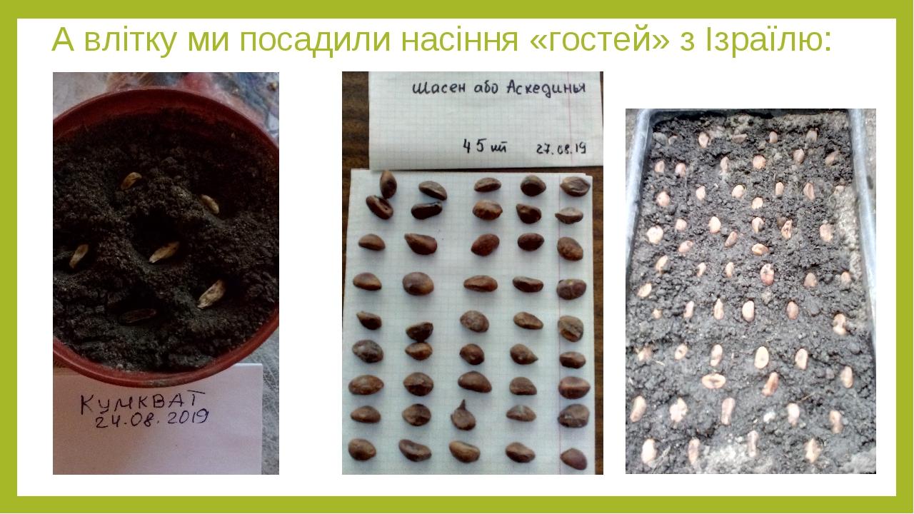 А влітку ми посадили насіння «гостей» з Ізраїлю: