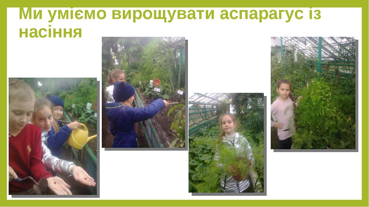Ми уміємо вирощувати аспарагус із насіння