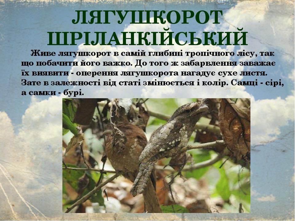 ЛЯГУШКОРОТ ШРІЛАНКІЙСЬКИЙ  Живе лягушкорот в самій глибині тропічного лісу, так що побачити його важко. До того ж забарвлення заважає їх виявити -...
