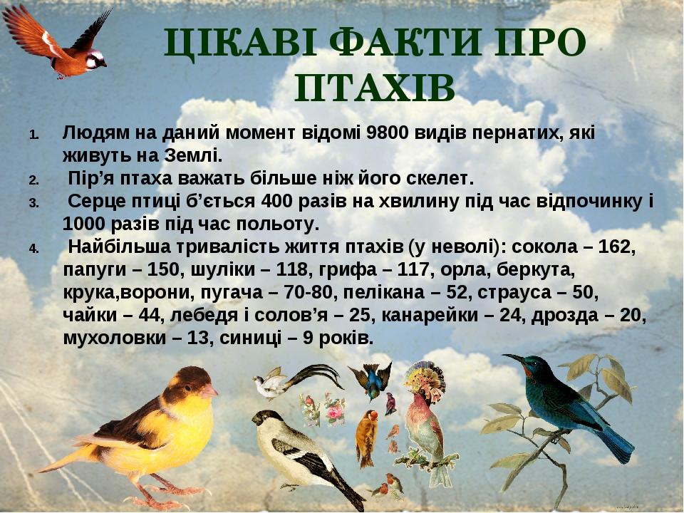 ЦІКАВІ ФАКТИ ПРО ПТАХІВ Людям на даний момент відомі 9800 видів пернатих, які живуть на Землі. Пір'я птаха важать більше ніж його скелет. Серце пти...
