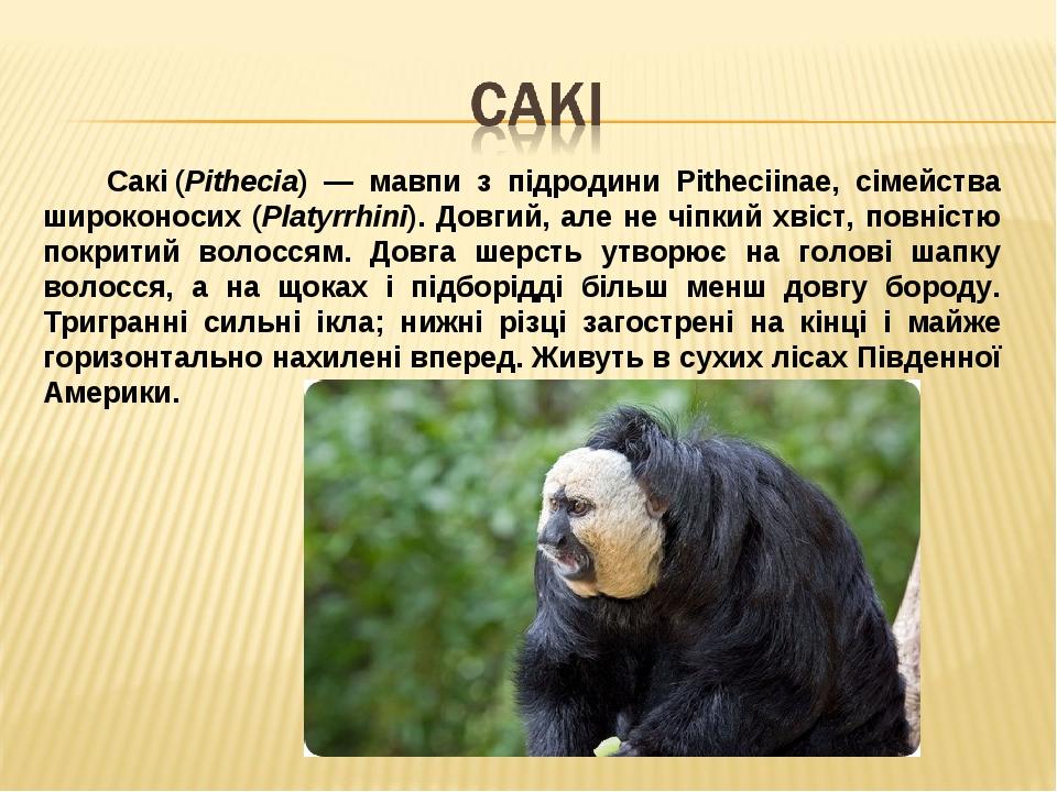 Сакі(Pithecia) — мавпи з підродини Pitheciinae, сімейства широконосих (Рlatyrrhini). Довгий, але не чіпкий хвіст, повністю покритий волоссям. Довг...