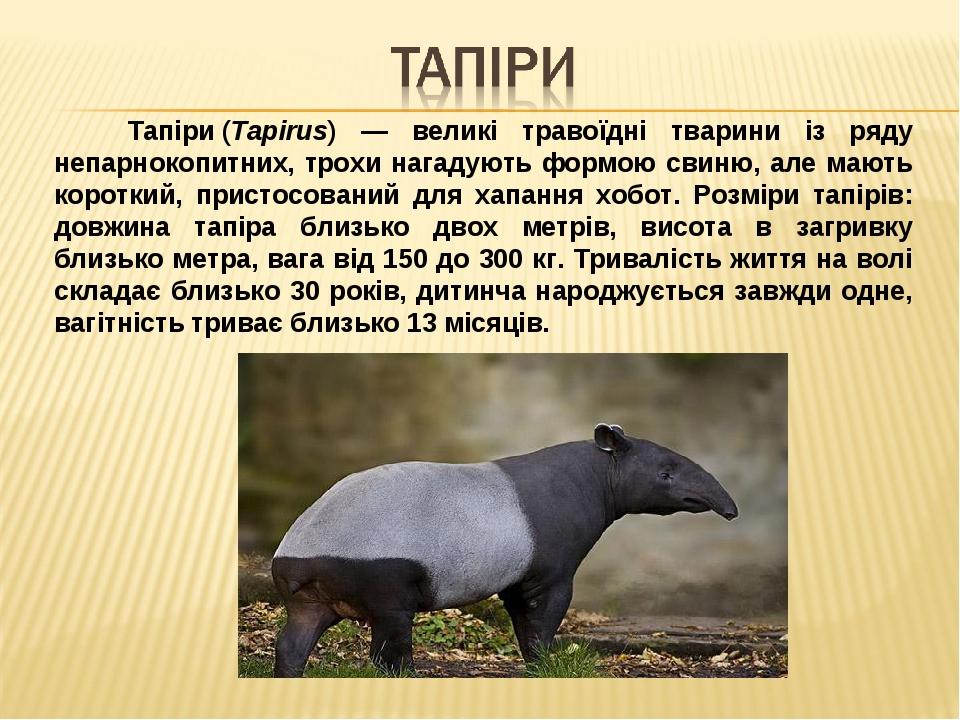 Тапіри(Tapirus) — великі травоїдні тварини із ряду непарнокопитних, трохи нагадують формою свиню, але мають короткий, пристосований для хапання хо...