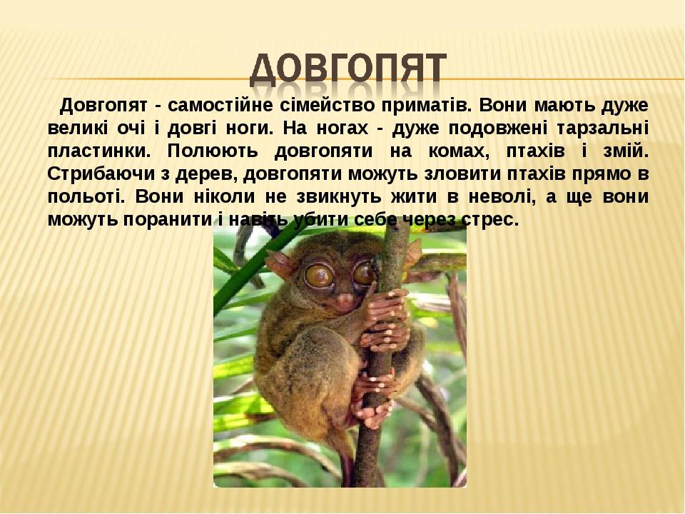 Довгопят - самостійне сімейство приматів. Вони мають дуже великі очі і довгі ноги. На ногах - дуже подовжені тарзальні пластинки. Полюють довгопяти...