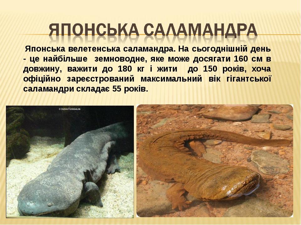 Японська велетенська саламандра.На сьогоднішній день - це найбільше земноводне, яке може досягати 160 см в довжину, важити до 180 кг і жити до 15...