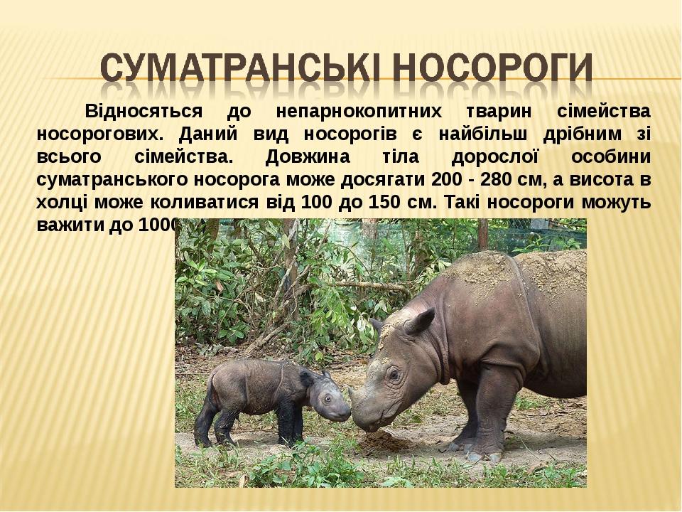 Відносяться до непарнокопитних тварин сімейства носорогових. Даний вид носорогів є найбільш дрібним зі всього сімейства. Довжина тіла дорослої особ...