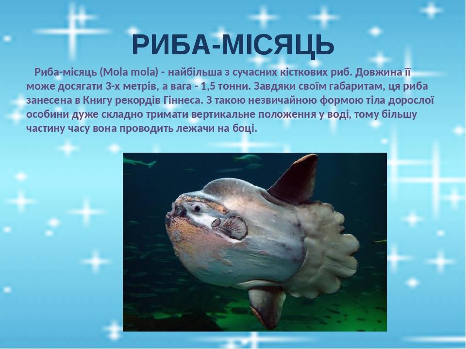 РИБА-МІСЯЦЬ Риба-місяць (Mola mola) - найбільша з сучасних кісткових риб. Довжина її може досягати 3-х метрів, а вага - 1,5 тонни. Завдяки своїм га...