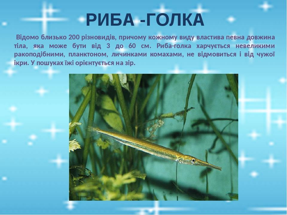РИБА -ГОЛКА Відомо близько 200 різновидів, причому кожному виду властива певна довжина тіла, яка може бути від 3 до 60 см. Риба-голка харчується не...