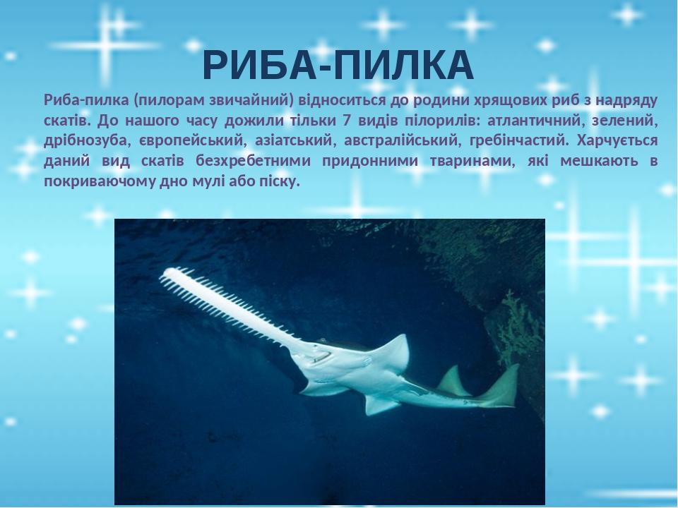 РИБА-ПИЛКА Риба-пилка (пилорам звичайний) відноситься до родини хрящових риб з надряду скатів. До нашого часу дожили тільки 7 видів пілорилів: атла...