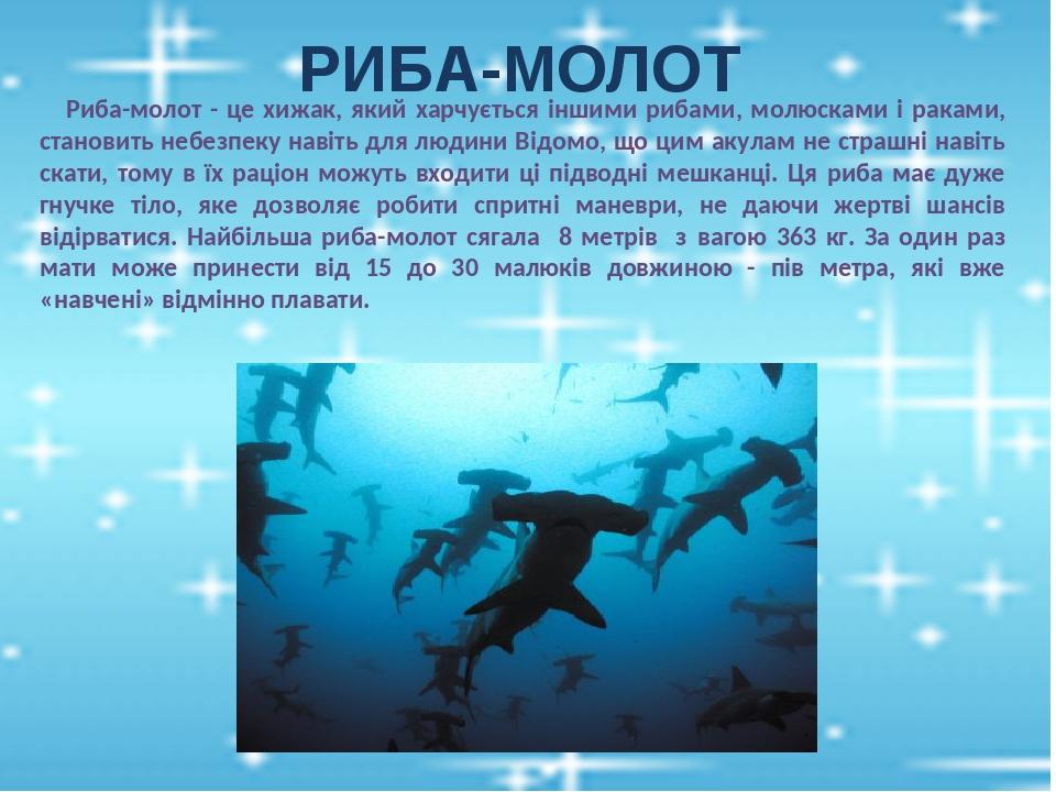 РИБА-МОЛОТ Риба-молот - це хижак, який харчується іншими рибами, молюсками і раками, становить небезпеку навіть для людини Відомо, що цим акулам не...