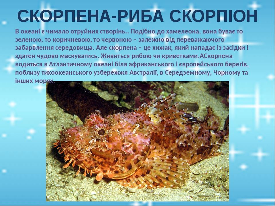 СКОРПЕНА-РИБА СКОРПІОН В океані є чимало отруйних створінь.. Подібно до хамелеона, вона буває то зеленою, то коричневою, то червоною – залежно від ...