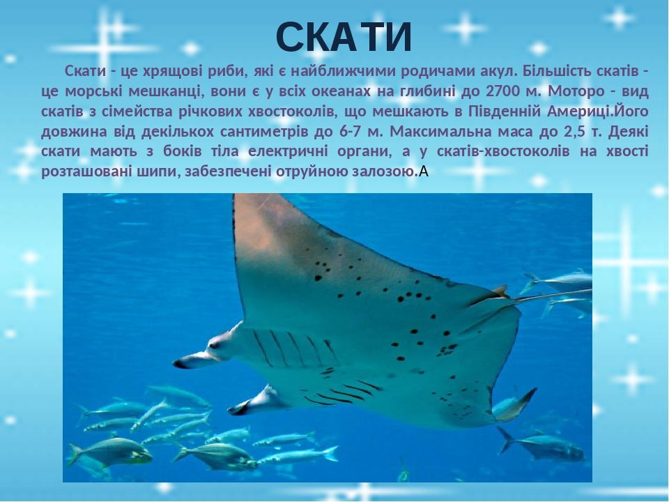 СКАТИ Скати - це хрящові риби, які є найближчими родичами акул. Більшість скатів - це морські мешканці, вони є у всіх океанах на глибині до 2700 м....