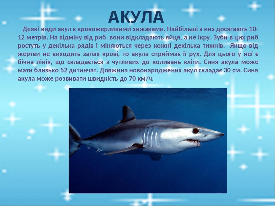 АКУЛА Деякі види акул є кровожерливими хижаками. Найбільші з них досягають 10-12 метрів. На відміну від риб, вони відкладають яйця, а не ікру. Зуби...
