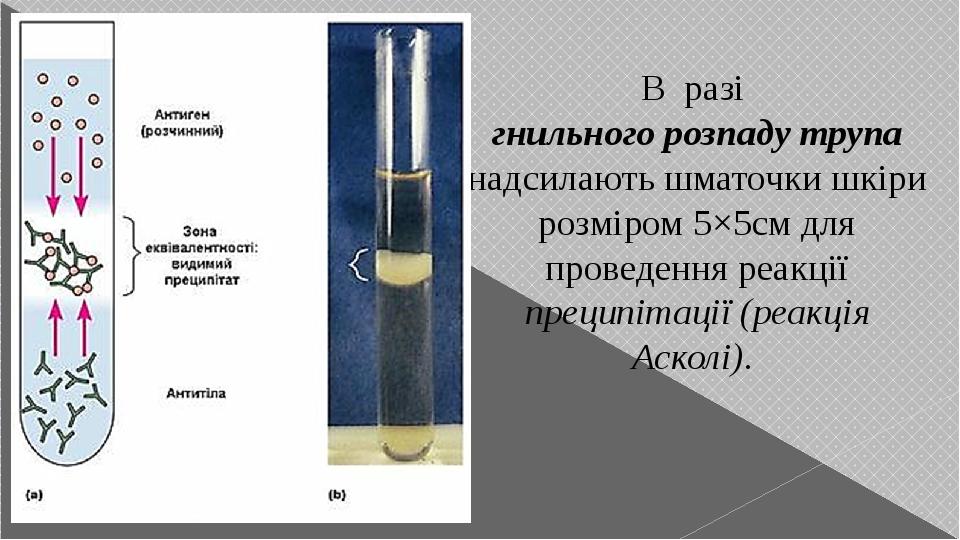 В разі гнильного розпаду трупа надсилають шматочки шкіри розміром 5×5см для проведення реакції преципітації (реакція Асколі).