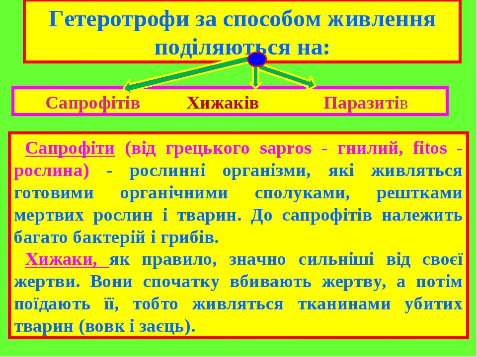 Гетеротрофи за способом живлення поділяються на: Сапрофітів Хижаків Паразитів Сапрофіти (від грецького sapros - гнилий, fitos - рослина) - рослинні...
