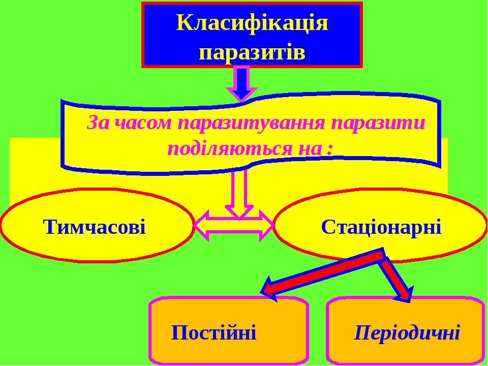 Класифікація паразитів Тимчасові Стаціонарні Постійні Періодичні За часом паразитування паразити поділяються на :