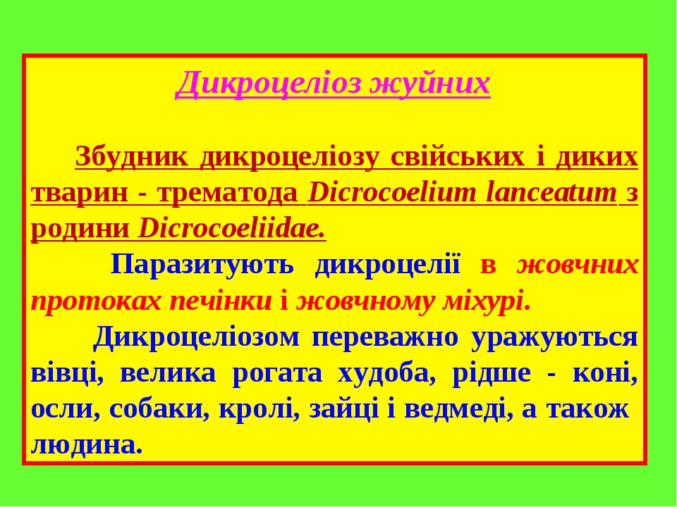 Дикроцеліоз жуйних Збудник дикроцеліозу свійських і диких тварин - трематода Dicrocoelium lanceatum з родини Dicrocoeliidae. Паразитують дикроцелії...