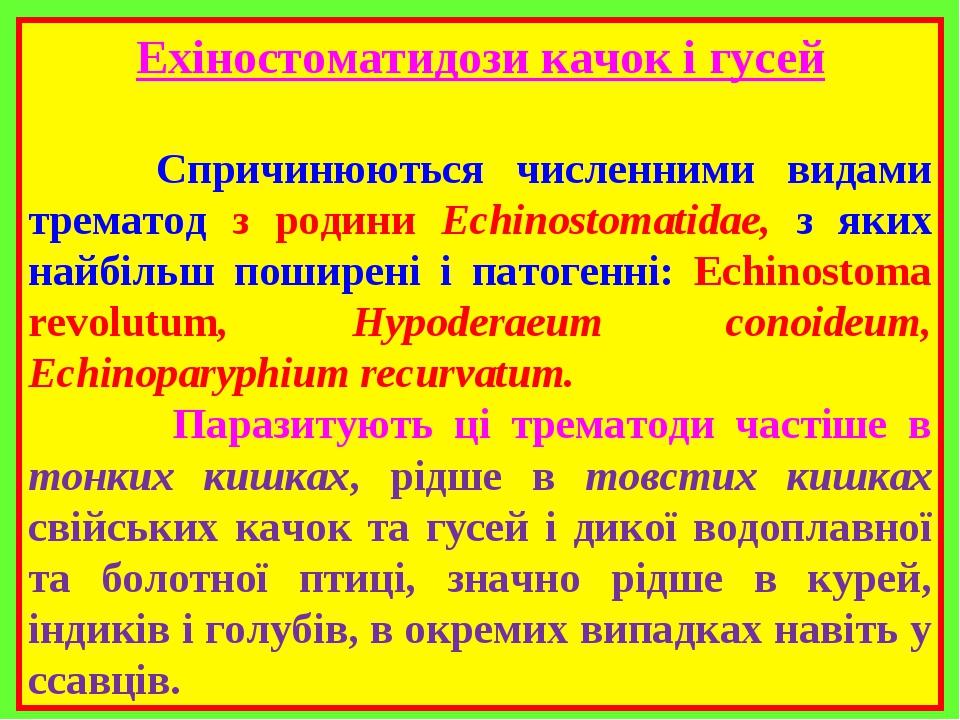 Ехіностоматидози качок і гусей Спричинюються численними видами трематод з родини Echinostomatidae, з яких найбільш поширені і патогенні: Echinostom...
